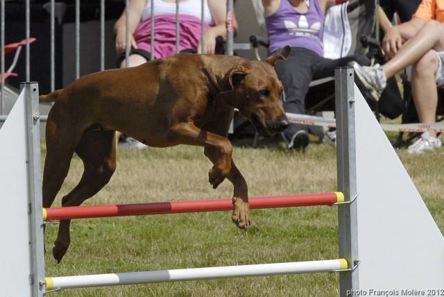 Agility Club Canin Yonnais 29 juillet 2012